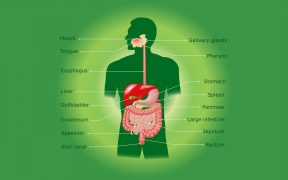 Digestive system, cancer