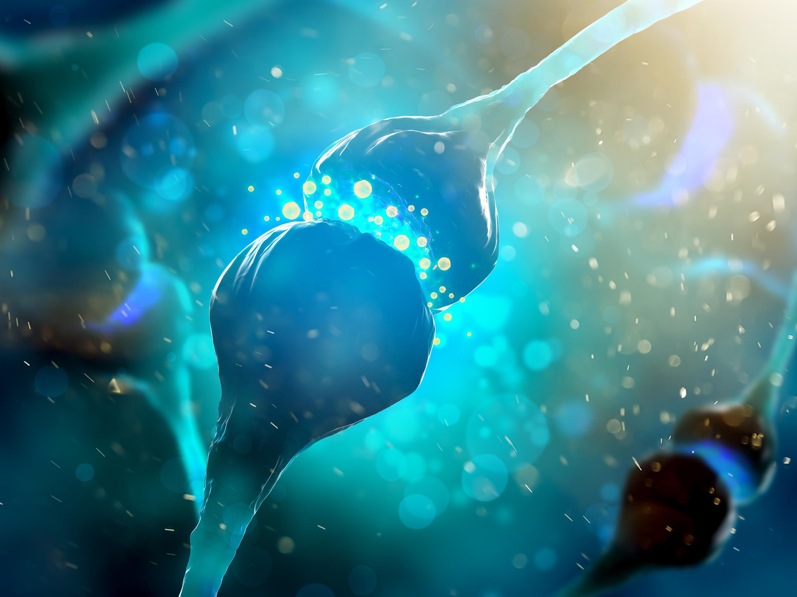 Neurons, nerve cells